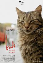 KEDI LA CITTA  DEI GATTI dal 22 maggio al cinema